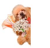 Dog smelling flowers. — Photo