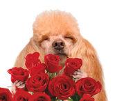 Dog smelling flowers. — Stock Photo