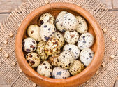 Quail eggs. — Stock Photo