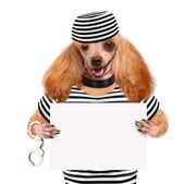 在监狱里的狗. — 图库照片