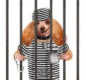 Dog in prison. — Stock Photo