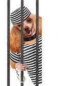 Perro en la prisión. — Foto de Stock