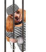 Dog in prison. — Stock Photo