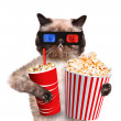 Cat watching a movie — Stock Photo