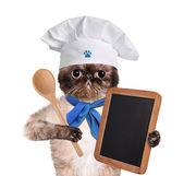 Chef gatto. — Foto Stock