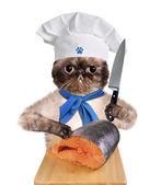 Gato shef. — Foto de Stock