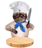 Cat chef — Stock Photo