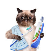 Brushing teeth cat. — Stock Photo