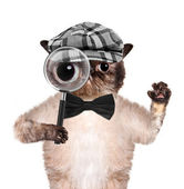 Cat with magnifying glass and searching — Stock Photo