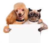 Dog with a cat holding in his paws white banner. — Stock Photo