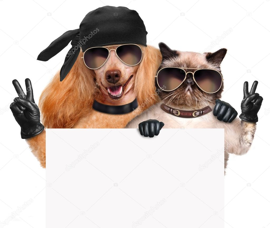 Black leather gloves with coloured fingers - Dog And Cat With Peace Fingers In Black Leather Gloves Stock Image