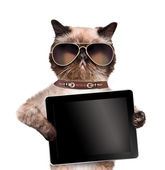 Cat holding a tablet. — Stock Photo