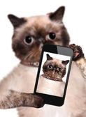 Cat taking a selfie with a smartphone — Stock Photo