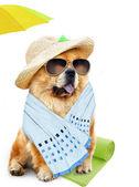 Dog. Holidays at sea — Stock Photo