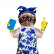 Housewife cat. — Stock Photo #46614201