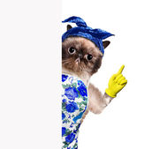 Housewife cat. — Stock Photo