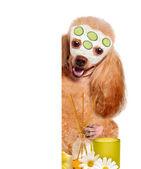 Spa wash dog — Stock Photo