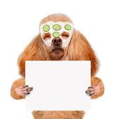 Lázně mytí pes — Stock fotografie