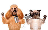 Cat with a dog on the phone with a can — Stock Photo
