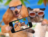 Dog with cat taking a selfie together with a smartphone — Stok fotoğraf