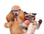 Dog with a cat eat ice cream. — Stock Photo