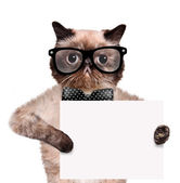 Placeholder banner cat — Stock Photo