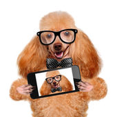 Dog taking a selfie with a smartphone — Stock Photo
