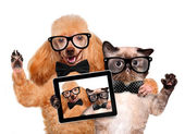 Dog with cat taking a selfie together with a tablet — Stock Photo