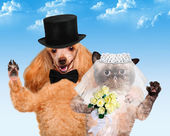 Cat and Dog. Wedding — Stock Photo