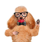 Hipster dog — Stock Photo