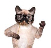 Hipster cat — Foto de Stock