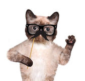Hipster cat — Stock Photo