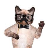 Gatto hipster — Foto Stock