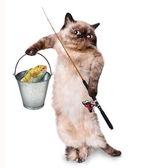 Fisher cat — Stock Photo