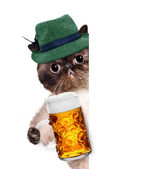 Cat with a beer mug — Stock Photo