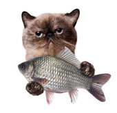 Cat with fish. — Stock Photo