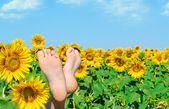 Female feet in sunflowers. — Stock Photo