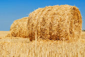 Field with haystack. Hay. — Stock Photo