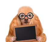 Crazy silly dog with funny glasses behind blank placard — Stock Photo
