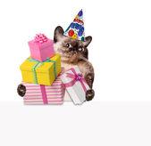 Birthday cat . — Stock Photo