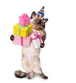 Birthday cat . — Stock Photo