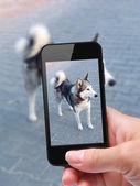 Zdjęcie siebie pies z smartphone — Zdjęcie stockowe