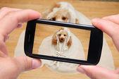 自我狗与智能手机的照片 — 图库照片