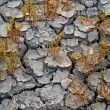 Stock Photo: Plants grows at dry soil
