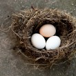 Three eggs in bird's nest — Stock Photo