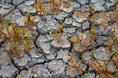 Plants grows at dry soil — Stock Photo