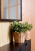 Plants in room design — 图库照片
