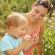 Woman and little son admires daisies — Stock Photo