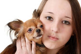 Girl and toy terrier — Stock Photo