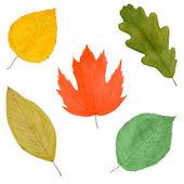 Conjunto de hojas otoñales, acuarela dibujado, aislado — Foto de Stock